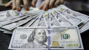 Tỷ giá ngoại tệ hôm nay (12/11): Euro quay đầu lao dốc, USD vẫn