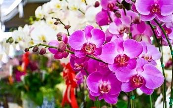12 con giáp nên mua loại hoa gì dịp Tết năm 2021 để hút tài lộc, may mắn?