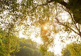 Dự báo thời tiết 10 ngày tới (10/7-20/7): Bắc Bộ vẫn nắng nóng gay gắt, có mưa dông sáng sớm