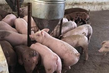 Giá heo hơi hôm nay (27/7): Sau 1 tháng nhập lợn từ Thái Lan, giá vẫn chưa hạ nhiệt