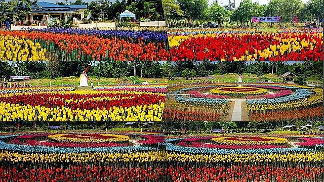 philippines vuon tulip lung linh nay mam tu rac thai nhua